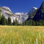 Yosemite meadows